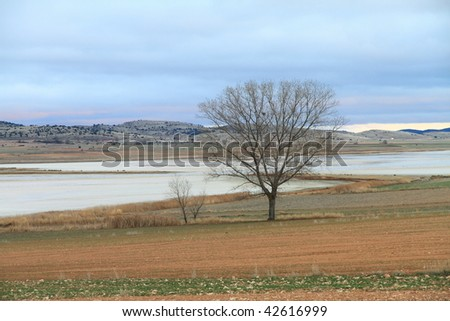 Gallocanta lagoons nature reserve, Aragon, Spain #42616999