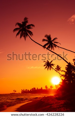 Sunset on tropical beach with palm trees silhouettes and shining sun circle #426228226