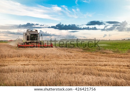 Harvester is working in the field during harvest time. Harvester is cutting corn, working whole day. Agriculture concept #426421756