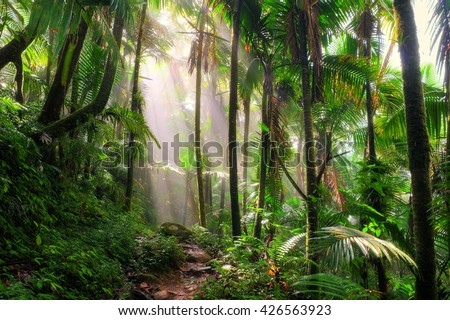 Beautiful jungle path through the El Yunque national forest in Puerto Rico Royalty-Free Stock Photo #426563923