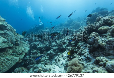 Tropical coral reef and fishes, marine life. #426779137