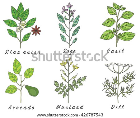 Set of spices, medicinal herbs and officinale healing plants icons. Hand drawn illustrations. Botanic sketches. #426787543
