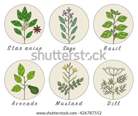 Set of spices, medicinal herbs and officinale healing plants icons. Hand drawn illustrations. Botanic sketches. #426787552