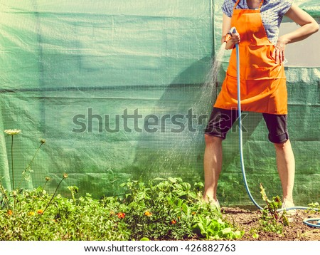 Gardening. Woman in orange apron holds the sprinkler hose for irrigation plants watering the garden outdoor #426882763