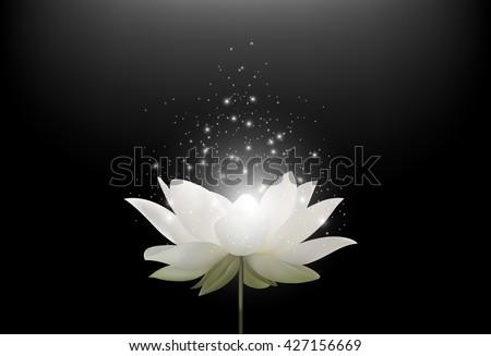 Magic White Lotus flower on black background.Vector #427156669
