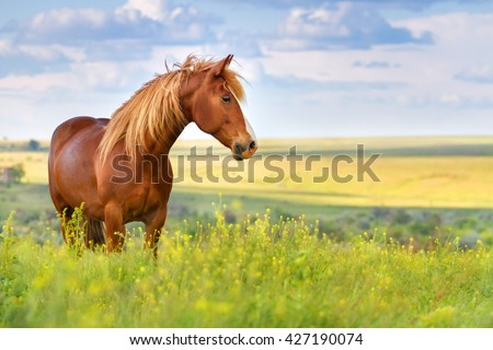 Red horse with long mane in flower field against  sky #427190074