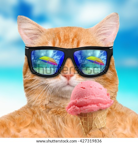 Cat wearing sunglasses relaxing in the sea background. Red cat eats ice cream.  #427319836