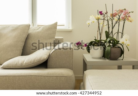 Beautiful modern living room with gray sofa and orchids #427344952