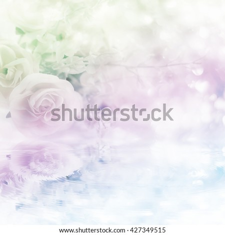 Soft blurred of rose flowers with soft bokeh in pastel color style with made the filters water reflection effects for background.