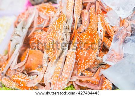 crab on ice #427484443