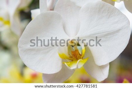 white orchid in the garden. #427781581