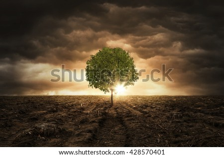 Single tree growing left on the chopped out forest over dramatic sky with copy space #428570401