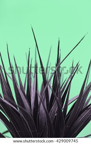 A studio photo of an artificial indoor plant #429009745
