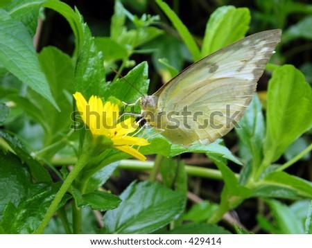 butterfly #429414