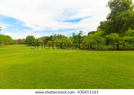 Green trees in beautiful park with blue sky #430451161