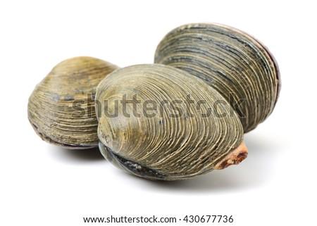 fresh clams on white background #430677736