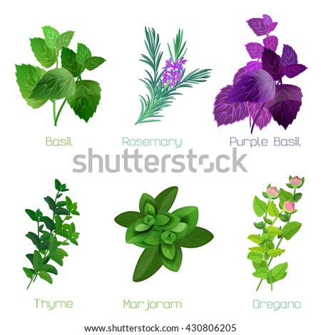 Herbs and spices: collection of kitchen and healing herbs. Vector illustration. #430806205