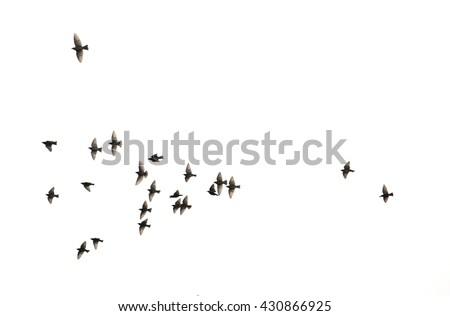 a flock of flying birds.