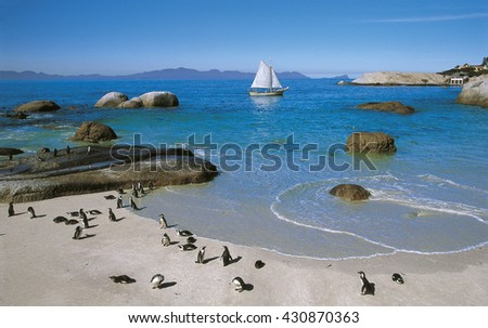 Penguins can be viewed in Boulders Beach, a famous attraction point in the Table Mountain National Park, South Africa. This Bay is the breeding area and visitors can view the penguins from platforms.