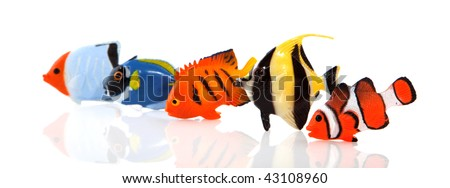 a row of tropical fishes isolated over white #43108960