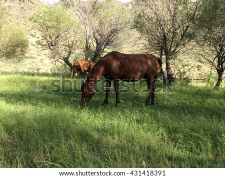 horse in the countryside #431418391