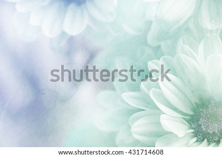 Soft flower background can be use for card design, unfocused #431714608