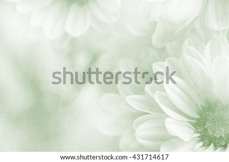 Soft flower background can be use for card design, unfocused #431714617