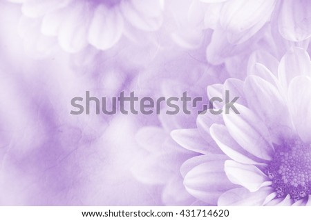 Soft flower background can be use for card design, unfocused #431714620