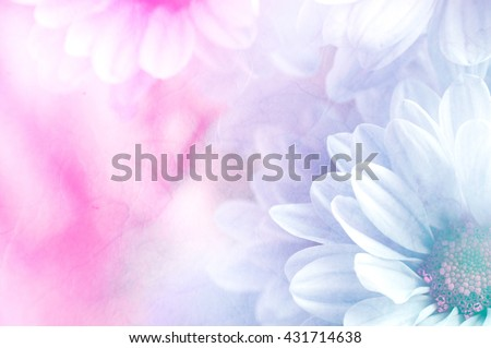 Soft flower background can be use for card design, unfocused #431714638