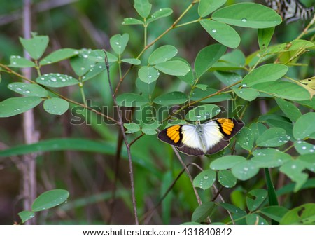 A beautiful  butterfly on a leaf #431840842