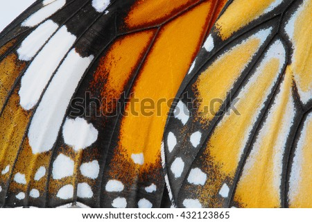 Macro Butterfly wing background,  Danaus chrysippus Royalty-Free Stock Photo #432123865