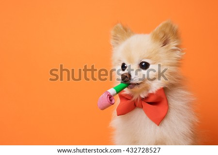 image of little funny dog