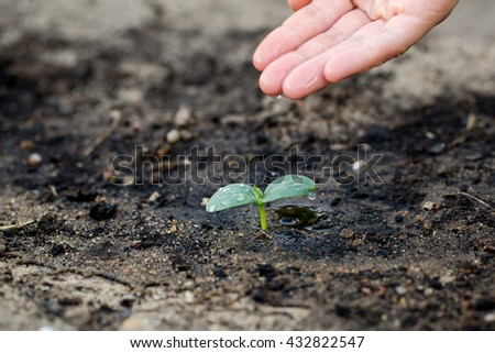 Woman's hand watering the soil of young plant. #432822547
