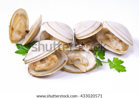 isolated clams #433020571