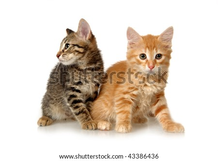 Kittens on a white background #43386436