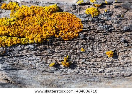 background with natural material and abstract texture  #434006710