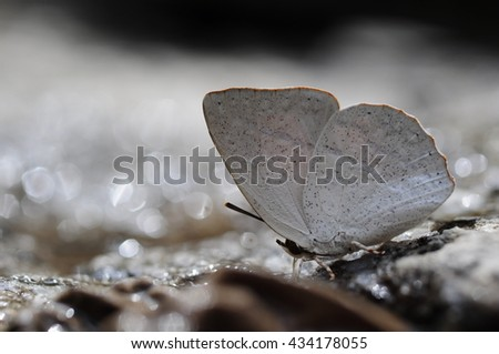 close up side view of butterfly (Dentate Sunbeam) on stone near river #434178055