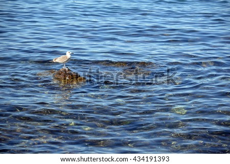 Young gull #434191393