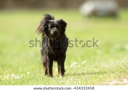 funny dog in sunny day, animals series #434333458