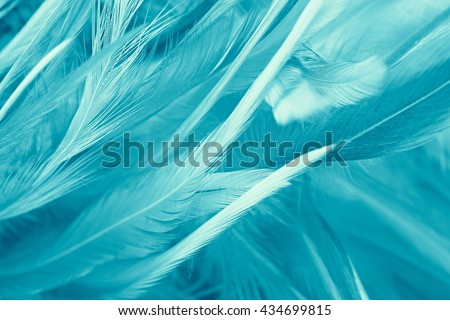 green turquoise vintage color trends feather texture background