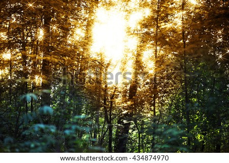 Horizontal sunset flares in forest landscape background #434874970