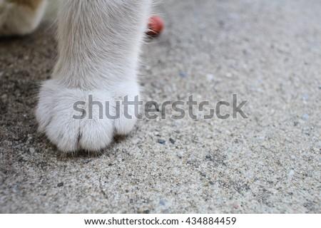Cat feet #434884459
