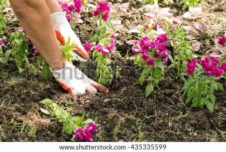 planting flowers #435335599