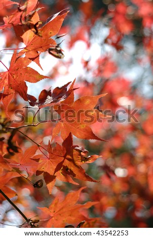 burning autumn #43542253
