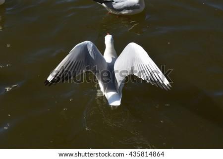 seagull  #435814864