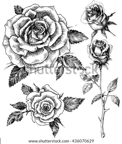 Flowers set. Hand drawn rose vector, etch style