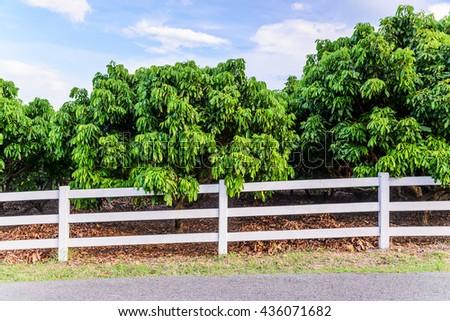 White concrete fence in fruit garden field #436071682