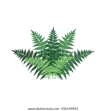 fern plant front view decorative vector element for landscape design #436149892