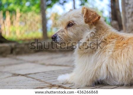 Cute dog #436266868