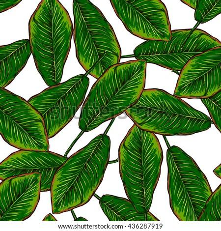 banana leaf pattern on white background #436287919